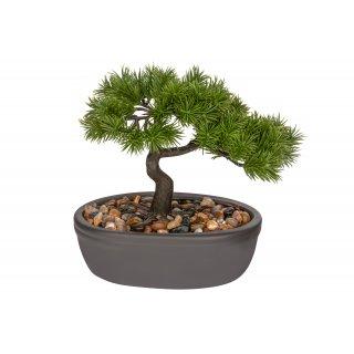 Drzewko ozdobne Bonsai iglasty KAEMINGK