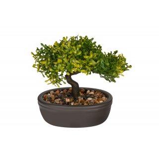 Drzewko ozdobne Bonsai liściasty KAEMINGK