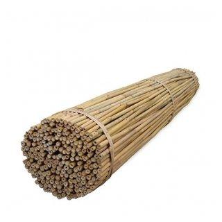 Tyczki bambusowe 60 cm TIN TOURS