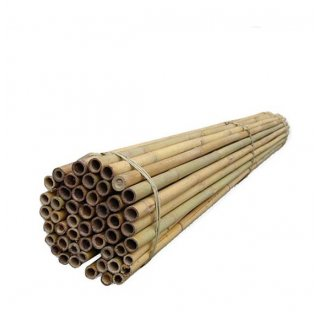 Tyczki bambusowe 210 cm -100 szt TIN TOURS